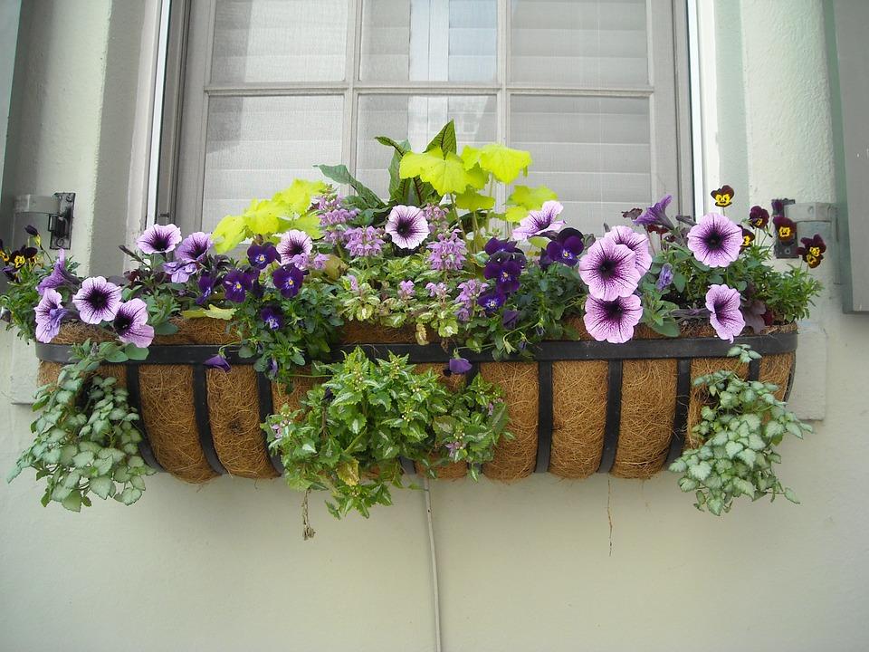 window-box-891985_960_720